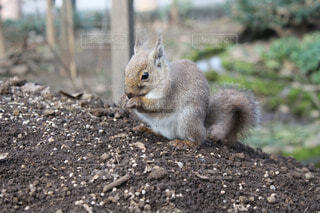 動物の写真・画像素材[60339]