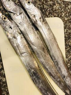 太刀魚の写真・画像素材[1650739]