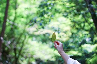 森の中でフリスビーを抱いている男の写真・画像素材[4123219]