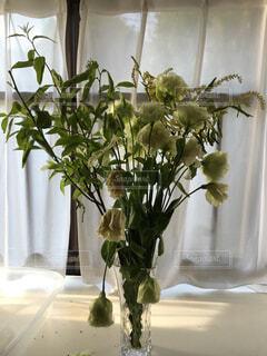 花の写真・画像素材[151722]
