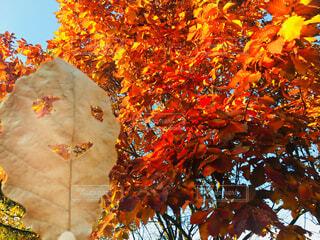 秋の写真・画像素材[1593730]