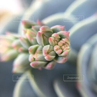 花の写真・画像素材[53200]