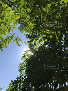 空の写真・画像素材[1578898]