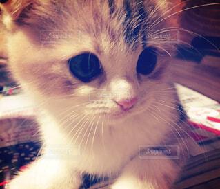近くに猫のアップの写真・画像素材[1589427]