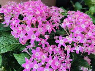近くの花のアップの写真・画像素材[1626629]