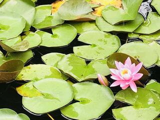 近くに池のアップの写真・画像素材[1627172]
