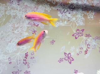 魚の写真・画像素材[1633573]