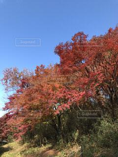 近くの木のアップの写真・画像素材[1647678]