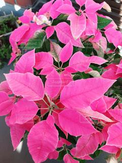 近くの植物にピンクの花のアップの写真・画像素材[1653438]