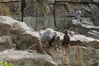 ベルリン動物園にての写真・画像素材[1576697]