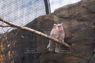 ベルリン動物園にての写真・画像素材[1576699]
