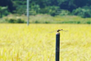 福島の田舎の田んぼの写真・画像素材[1577370]