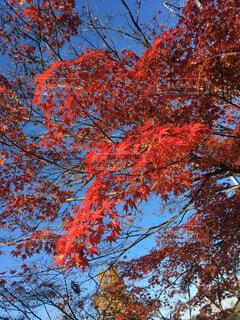 紅葉の時期の写真・画像素材[1581302]