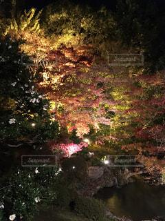 森林の写真・画像素材[1581309]