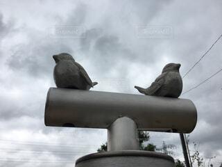 公園あるあるの鳥さんの写真・画像素材[1578842]