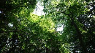 山頂の緑の写真・画像素材[1581501]
