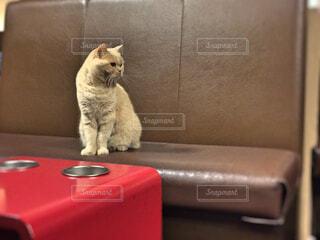 座る猫の写真・画像素材[1583582]