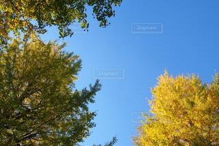 秋空の写真・画像素材[1588095]