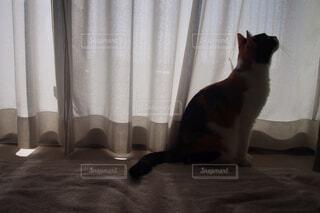 上を向く猫の写真・画像素材[1597269]