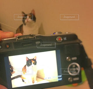 カメラ前に猫の写真・画像素材[1600424]