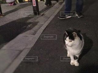 路上を歩く猫の写真・画像素材[1601679]