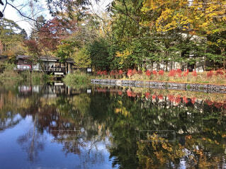 10月の雲場池の写真・画像素材[1604570]