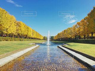 昭和記念公園の写真・画像素材[1617016]