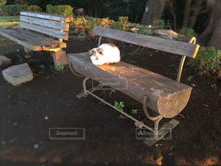朝陽を浴びる猫の写真・画像素材[1620279]