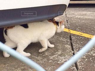何かを狙っている猫の写真・画像素材[1635020]