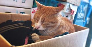 とある八百屋さんの猫の写真・画像素材[1640404]