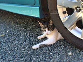 タイヤちかくで寛ぐネコの写真・画像素材[1643949]