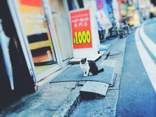 通りに猫の写真・画像素材[1644613]