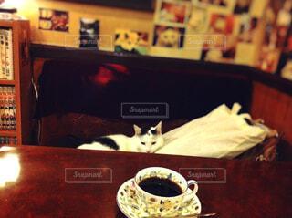 喫茶店の猫の写真・画像素材[1650680]