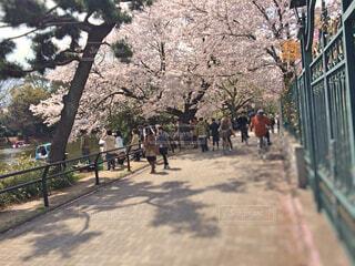 春の石神井公園の写真・画像素材[1653432]