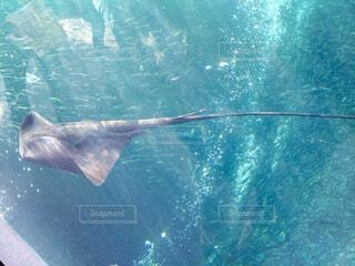 水族館の写真・画像素材[1653485]