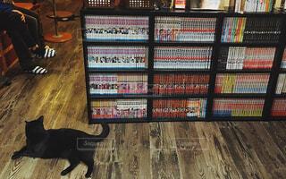 黒猫と本棚の写真・画像素材[1678038]