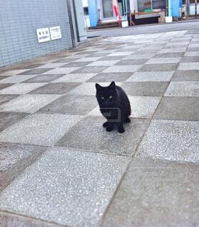 黒猫さんの写真・画像素材[1678193]