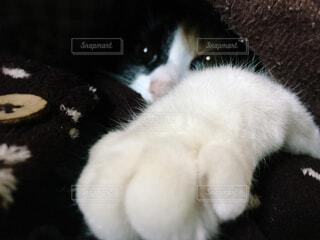 猫の手2の写真・画像素材[1693392]
