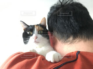 猫と中年男性の写真・画像素材[1737003]