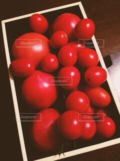 トマトの写真・画像素材[1596588]