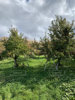 芝生のフィールドのツリーの写真・画像素材[1587712]