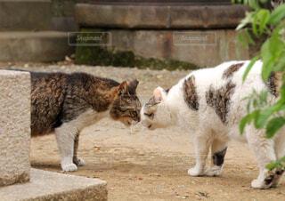 猫のご挨拶の写真・画像素材[1630579]