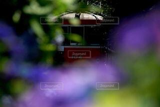 燃ゆるパープル、駆ける赤の写真・画像素材[1930352]