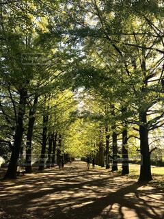 公園の写真・画像素材[1583887]