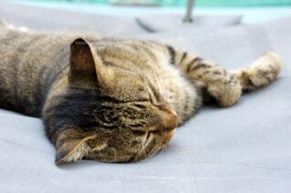 地面に横になっている猫の写真・画像素材[1585469]