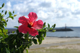 植物にピンクの花の写真・画像素材[1585477]