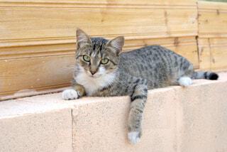 キプロスの猫の写真・画像素材[1589705]