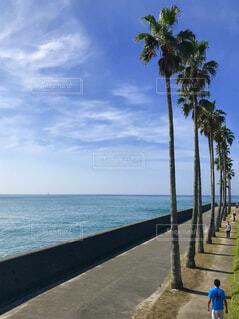 逗子マリーナの遊歩道の写真・画像素材[1604681]