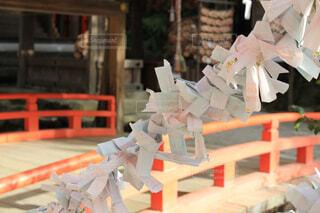 上賀茂神社のおみくじの写真・画像素材[1626218]