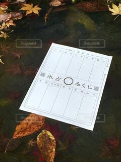 貴船神社の水占いの写真・画像素材[1630067]